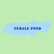 female_pond